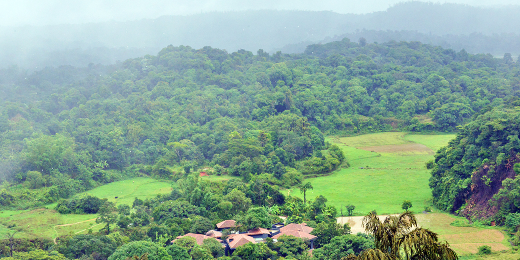 <strong>Rain Forest at Coorg</strong> -