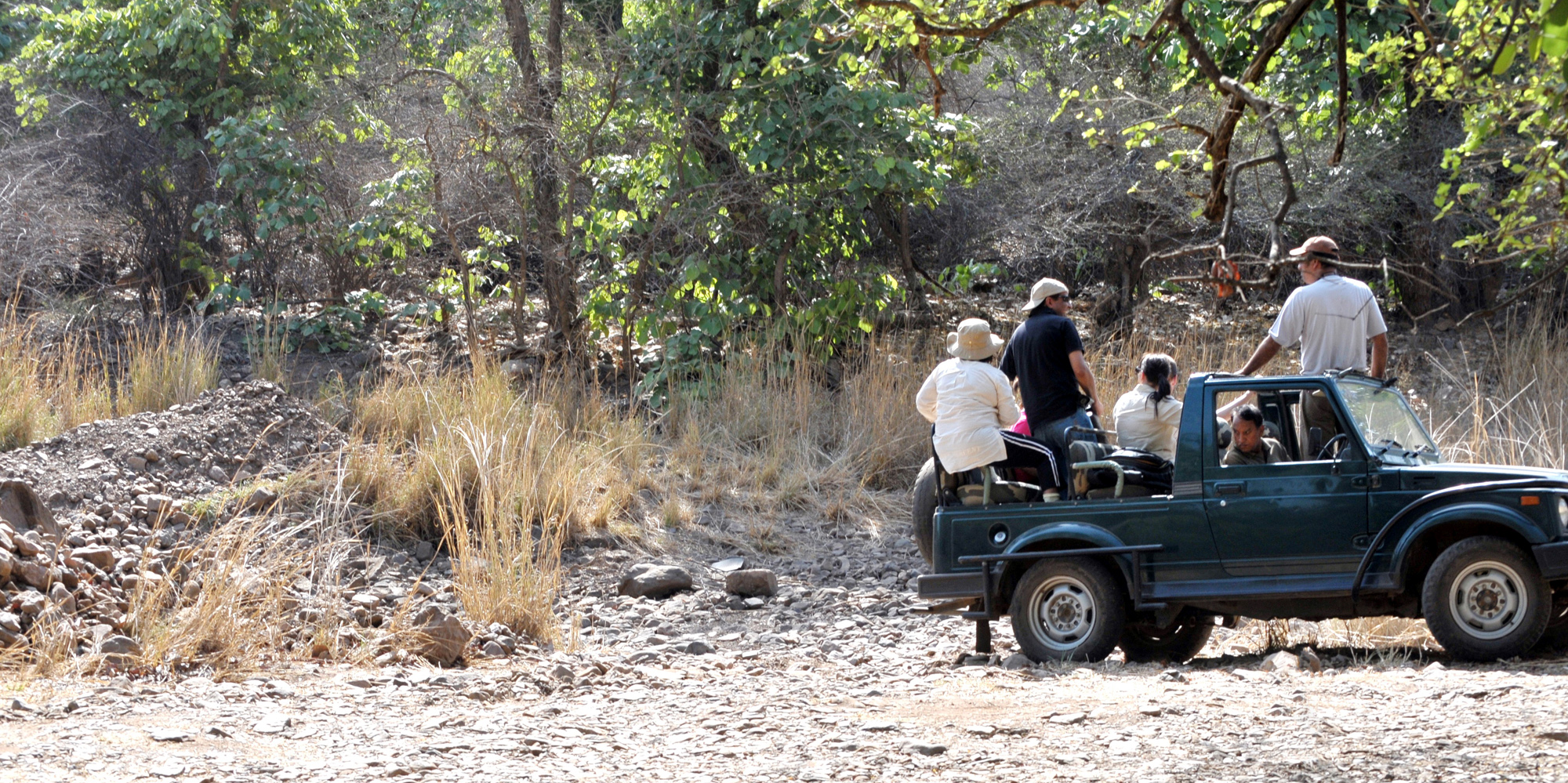 <strong>Tiger Safari at Ranthambore National Park, Ranthambore</strong> -