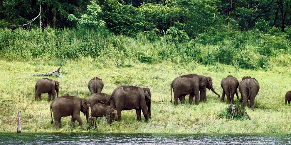 <strong>Periyar</strong> - Periyar National Park and Wildlife Sanctuary is a protected area in the districts of Idukki and Pathanamthitta in Kerala, south India.