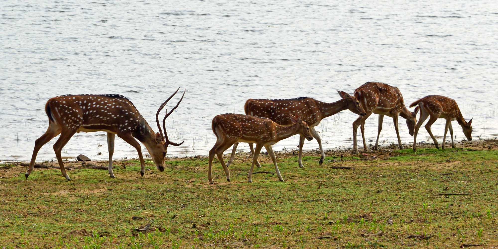 <strong>Tadoba Safari - 5</strong> -