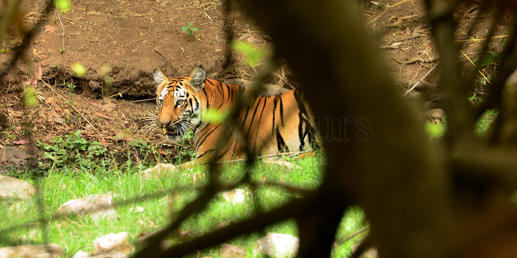 <strong>Tadoba Safari - 1</strong> -