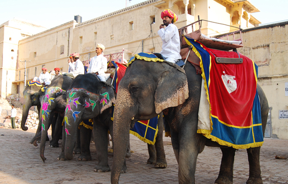 Jaipur Tours Elephant Ride