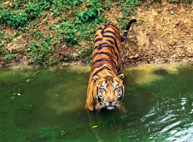 Wildlife tours in India