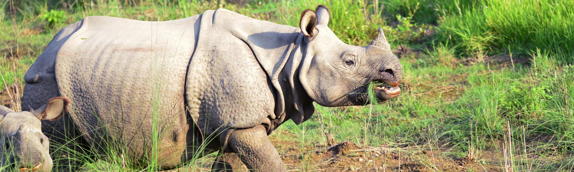 Information on Luxury Tours and Safaris in Kaziranga Park - Easy Tours of India