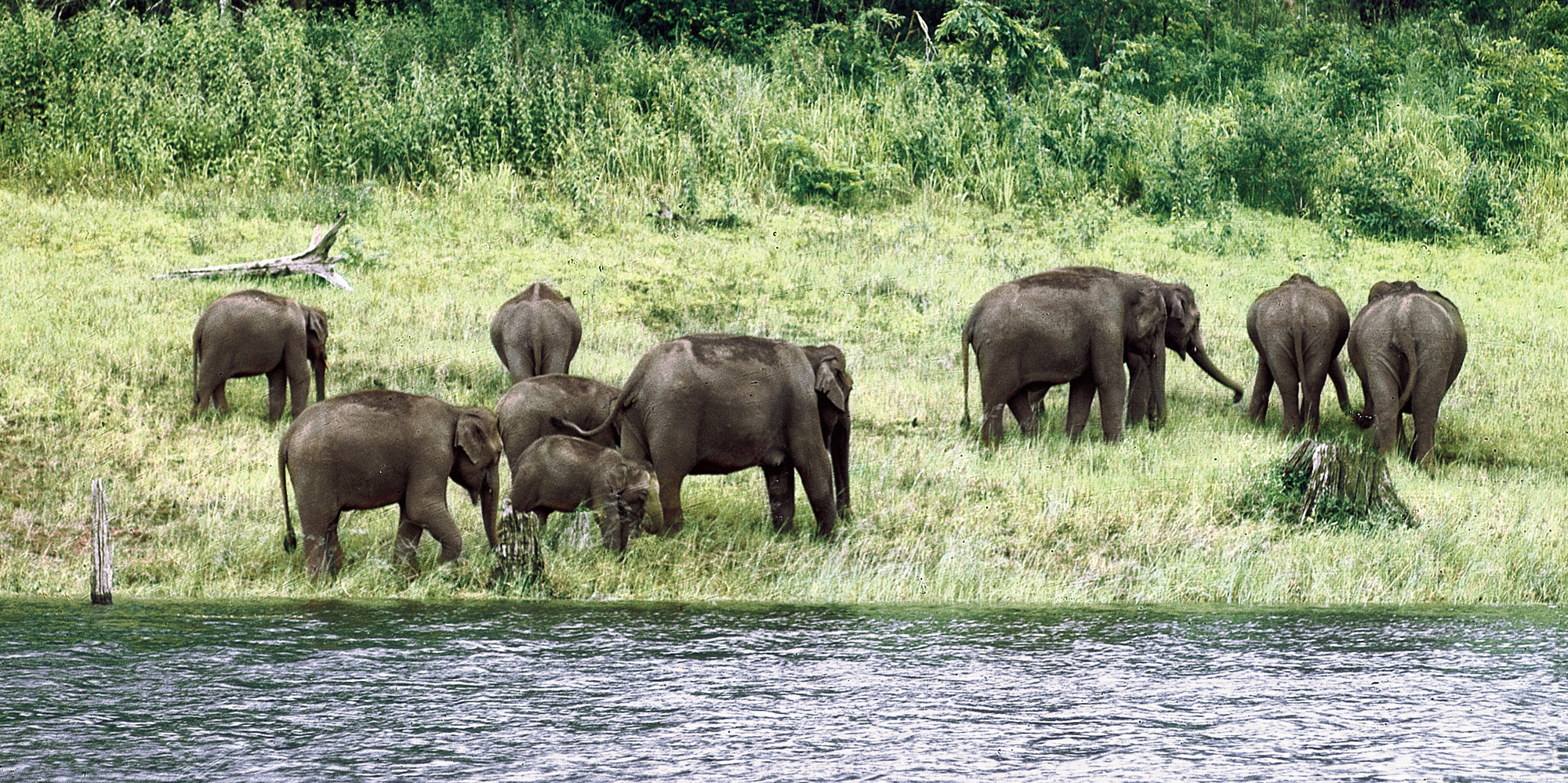 <strong>Periyar - 1</strong> - Periyar National Park and Wildlife Sanctuary is a protected area in the districts of Idukki and Pathanamthitta in Kerala, south India.