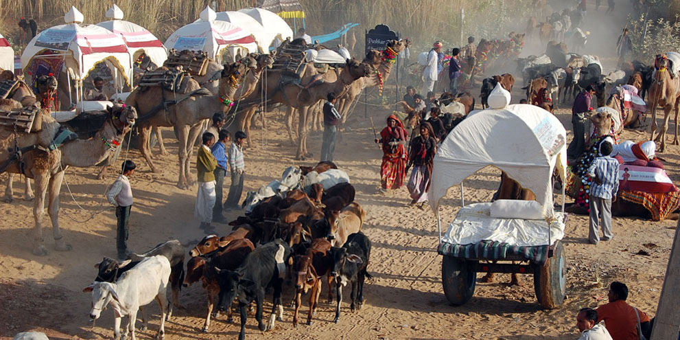 <strong>Pushkar Fair</strong> -