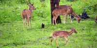 Nagarhole Park - 2 -