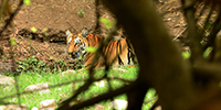 Tadoba Safari - 1 -
