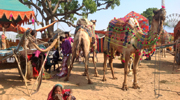 The colorful parades of Pushkar