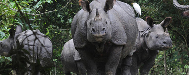 Kaziranga Wild Life Sanctuary ,