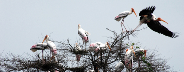 Keoladeo National Park  ,