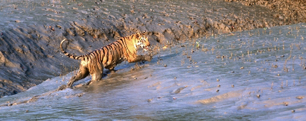 Sundarbans National Park  ,