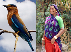 Wildlife and Culture Tours