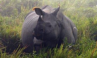 kaziranga wildlife tours