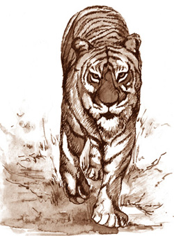 Tiger